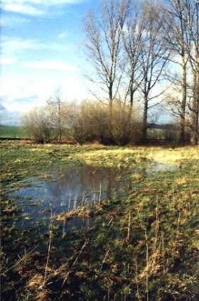Teilansicht des Auewaldes, von der Eigentümerin kostenlos für das Projekt zur Verfügung gestellt. Auch die Fläche davor wurde für das Projekt gesichert.  Vorn gut erkennbar der ehemalige Bachverlauf, der in den Wald führt.