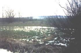 Auch die Nachbarflächen wurden erworben und in extensiv genutztes Feuchtgrünland umgewandelt.  Im Hintergrund links ein Restauewäldchen, dass durch Baum- und Heckenstreifen mit den Flächen im Vordergrund ökologisch angebunden wurde.