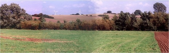 Oktober 2001: Erfolgsmeldung - der Heckensaum hat seine Bewohner wieder! Der Vergleich mit dem ersten Bild spricht für sich selbst!