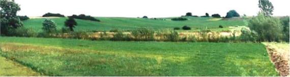 Nach 6 Jahren (1996) ist der Gehölzstreifen schon gut sichtbar, aus dem Acker hat sich eine teilweise mit Stauden versetzte Wiese entwickelt. Im Uferbereich unterbleiben die Unterhaltungsmaßnahmen.