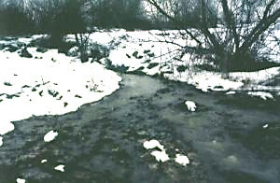 Das nährstoffreiche Wasser wird in der Fläche gefiltert.