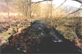 Begradigt und mit Wasserbausteinen verlief hier die Nieme, bis im Frühwinter 2002 der Unterhaltungsverband Münden den Altarm wieder reaktivierte.