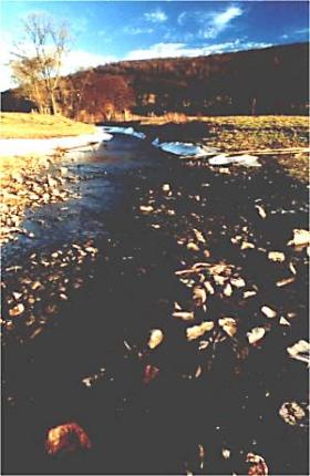 Der Mündungsbereich der Nieme in die Weser. Kies und Steine (Geschiebe) liegen bereits im Bett der Weser.