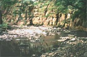 Der Unterlauf weist auch noch intakte Bachabschnitte auf. Ungestört findet die Nieme hier ihren Weg. Für die Wasseramsel ein Refugium.